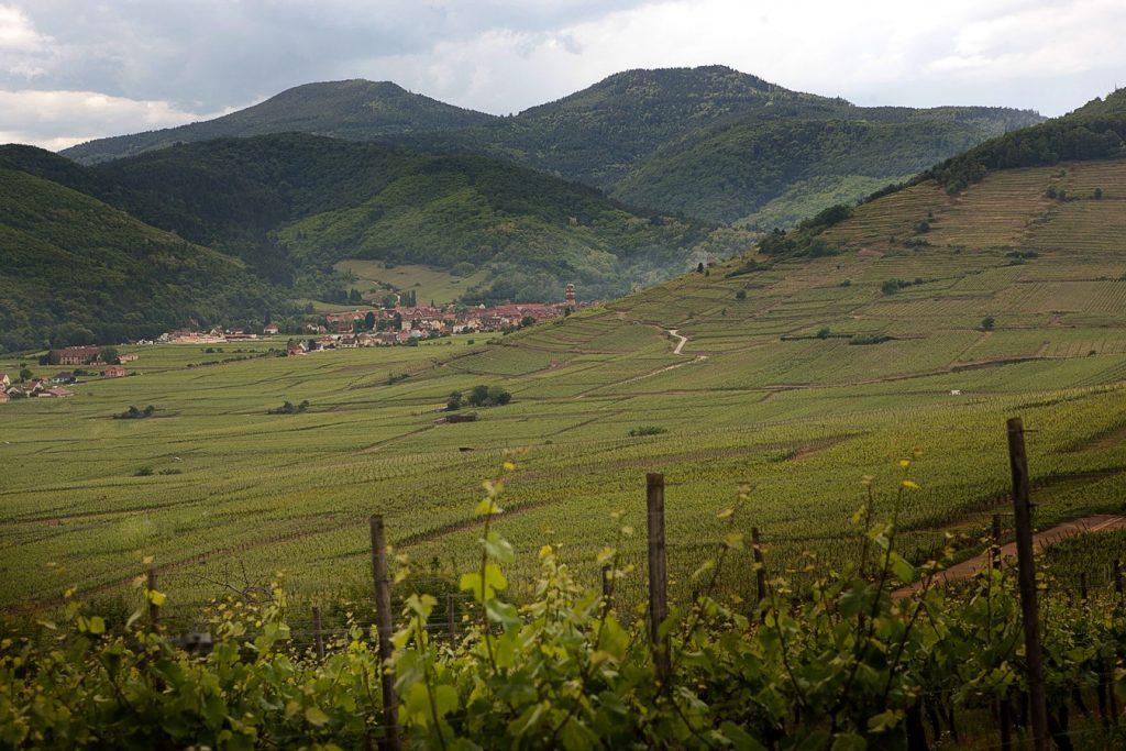 vigne-coteaux-jpg